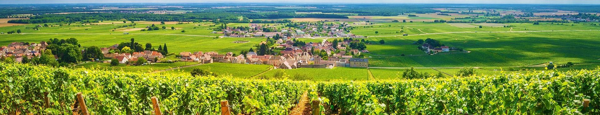 Nos grands vins abordables - OnWine